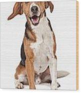 Beagle Mix Dog Isolated On White Wood Print