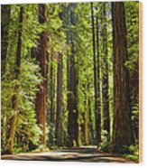 Beam Of Light In The Trees Wood Print