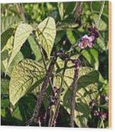 Bean And Beauty Wood Print
