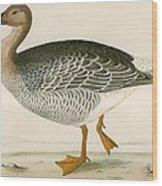 Bean Goose Wood Print