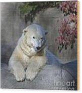 Bear 3789 Wood Print
