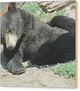 Bear At Rest Wood Print