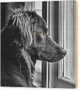 Bear At Window Wood Print