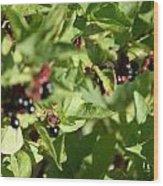 Bear Berries Wood Print