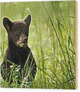 Bear Cub In Clover Wood Print