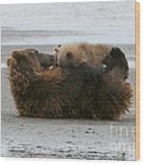 Bear Cubs Nurse Wood Print