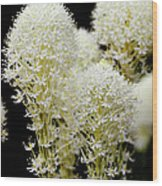 Bear Grass Flowers Glacier National Park Wood Print