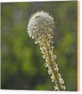 Bear Grass Glow Wood Print