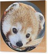 Bear In A Ball Wood Print