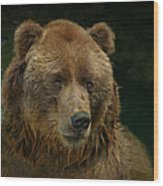 Bear In The Pool Wood Print