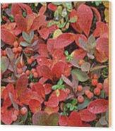 Bearberry In Autumn Yukon Canada Wood Print