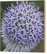 Bearded Flower Wood Print