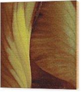 Bearded Iris Wood Print
