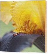 Bearded Iris Dwight Enys Abstract Wood Print by Tim Gainey