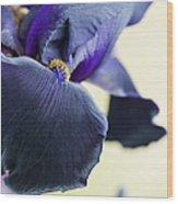 Bearded Iris Interpol Wood Print