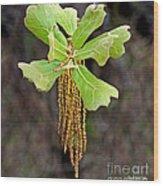 Bearded Oak Wood Print