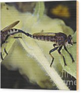 Bearded Robber Flies Wood Print