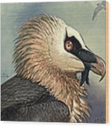 Bearded Vulture Wood Print