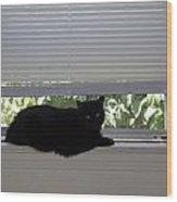 Beare On Window Wood Print