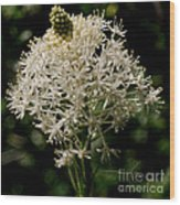 Beargrass Bloom Wood Print