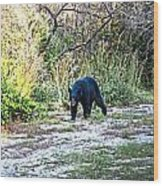 Bearly Stroll Wood Print