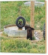 Bears At Play Wood Print