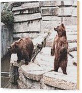 Bears Feeding Time At The Zoo II Wood Print
