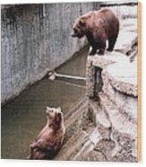 Bears Feeding Time At The Zoo Wood Print