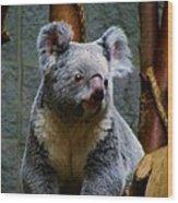 Bears In Ohio. No.17 Wood Print