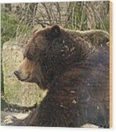 Bears In Ohio. No.22 Wood Print
