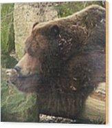 Bears In Ohio. No.23 Wood Print