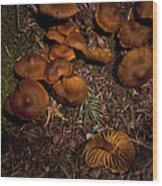 Beartooth Mountain Mushrooms   #3661 Wood Print