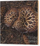 Beartooth Mountain Mushrooms   #9142 Wood Print