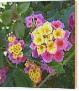 Beaucoup Of Blooms Wood Print