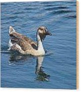 Beautiful African Brown Goose Wood Print