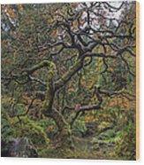 Beautiful And Bare Japanese Lace-leaf Maple Tree Wood Print