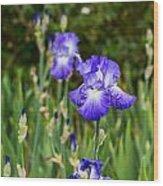 Beautiful And Colorful Iris. Wood Print