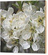 Beautiful Apple Blossoms Wood Print