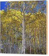 Beautiful Aspen Tree Wood Print