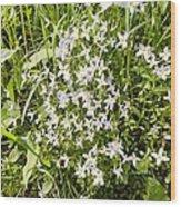 Beautiful Azure Bluets Appalachian Trail Wood Print