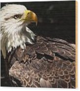 Beautiful Bald Eagle Wood Print