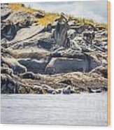Seals And Rock Scupltures Wood Print