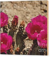 Beautiful Beavertail Cactus Wood Print