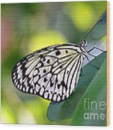 Beautiful Black N White Rice Paper Butterfly Wood Print
