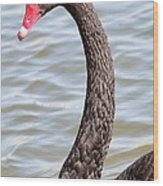 Beautiful Black Swan Wood Print