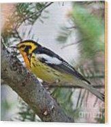 Beautiful Blackburnian Warbler Wood Print