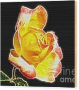 Beautiful Blooming Yellow Rose Wood Print