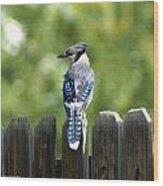Beautiful Blue Jay Wood Print