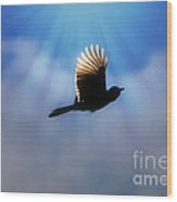 Beautiful Blue Jay In Flight Silhouette Wood Print