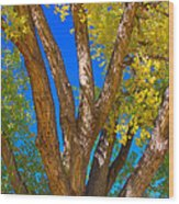 Beautiful Blue Sky Autumn Day Wood Print